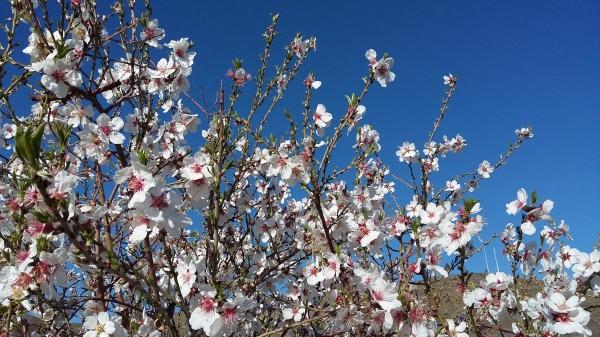 blossom-960107