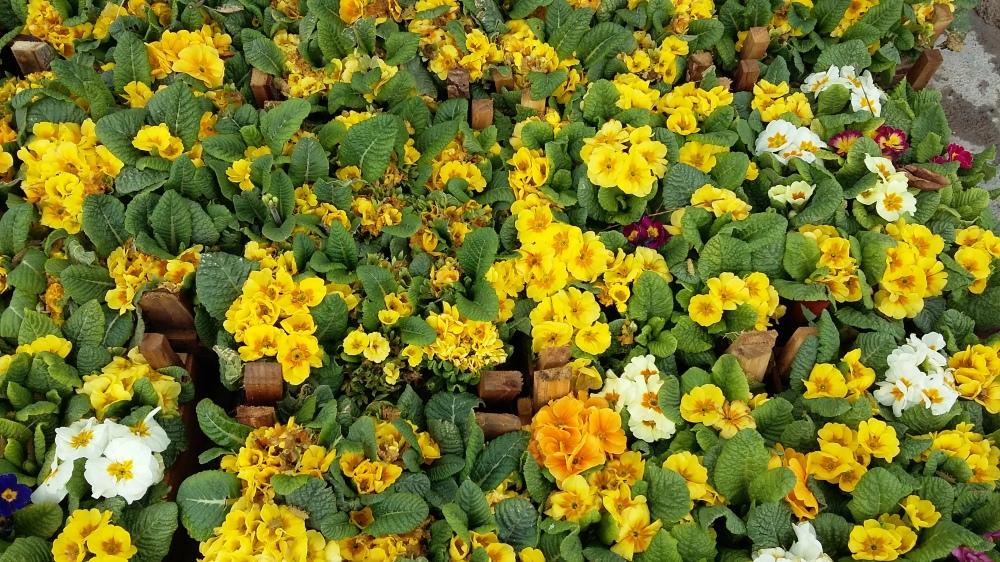 flower-960112