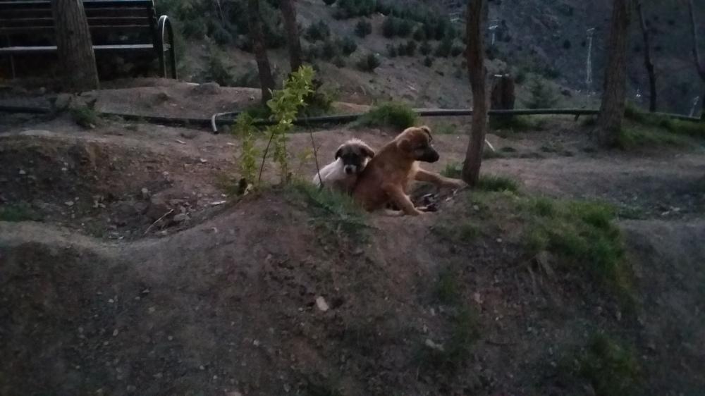 dog-960131