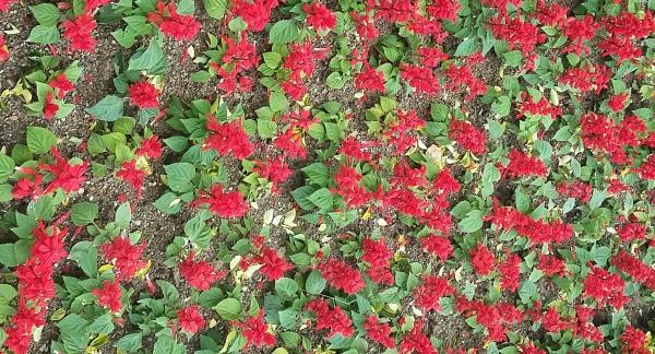 flower-960215