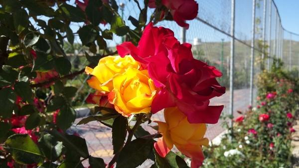 flower-960305-2
