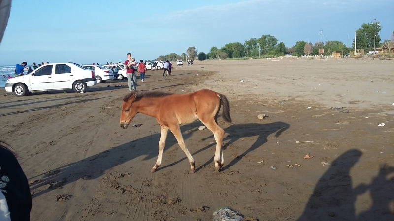 horse-960313