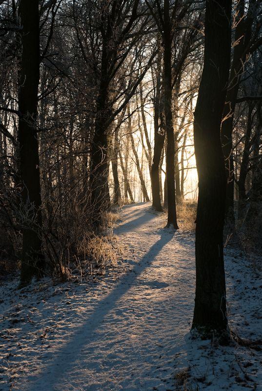 sunlight throuhg the trees