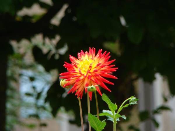 flower, unknown