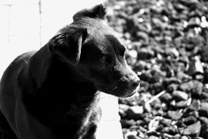 puppy magic