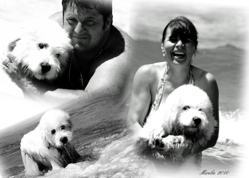 Collage - the grand pup owners!
