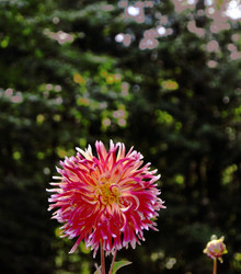 My own flower