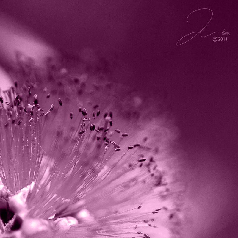 a splash of spring