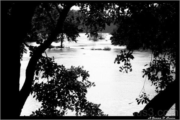 Cauvery