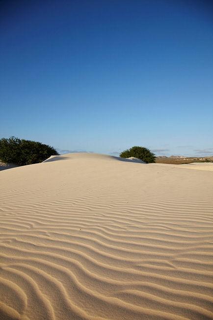 -Viana Desert-