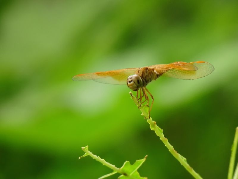 Dragonfly not flying :P