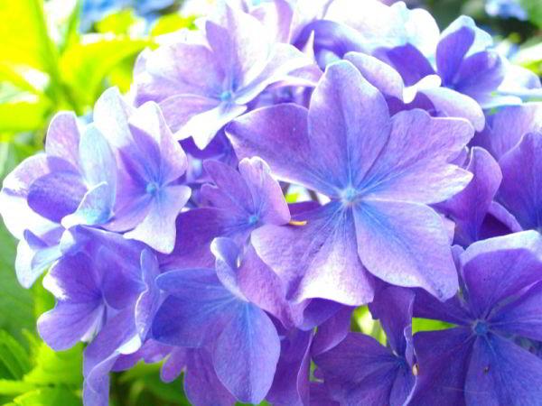 Blume auf der Pfaueninsel