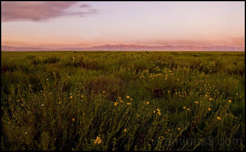Summer flowers at Sunset, Palo Alto Baylands