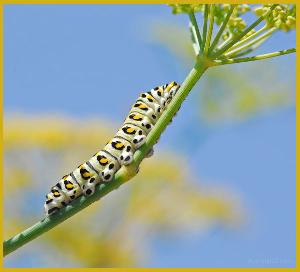A caterpillar in mid day sun
