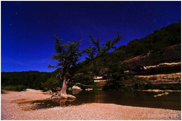 Guadlupe River and Cypress Tree under Stars, TX