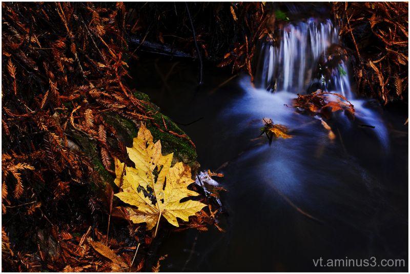Fall, Purisima Creek Redwoods OP, Santa Cruz Mt.