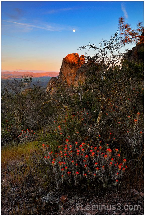 Indian Paintbrush and Moonrise, Pinnacles NM, CA
