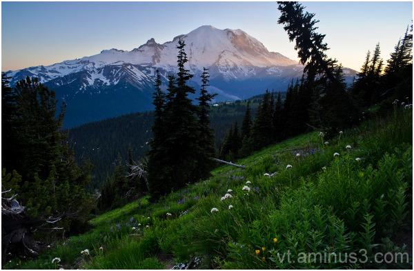 Summer Meadow beneath Mt. Rainier, WA