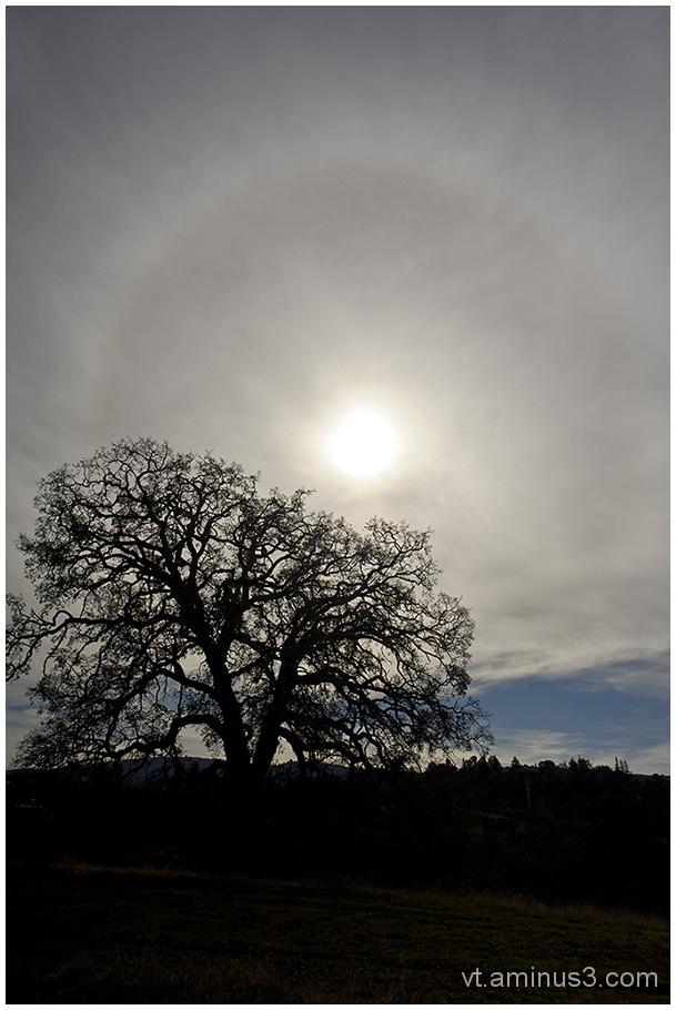 Solar Halo and Oak,Arastradero Pres., Palo Alto,CA