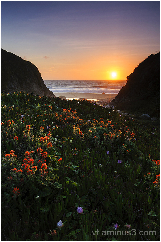 Backlit flowers in a cove at Sunset, Big Sur, CA