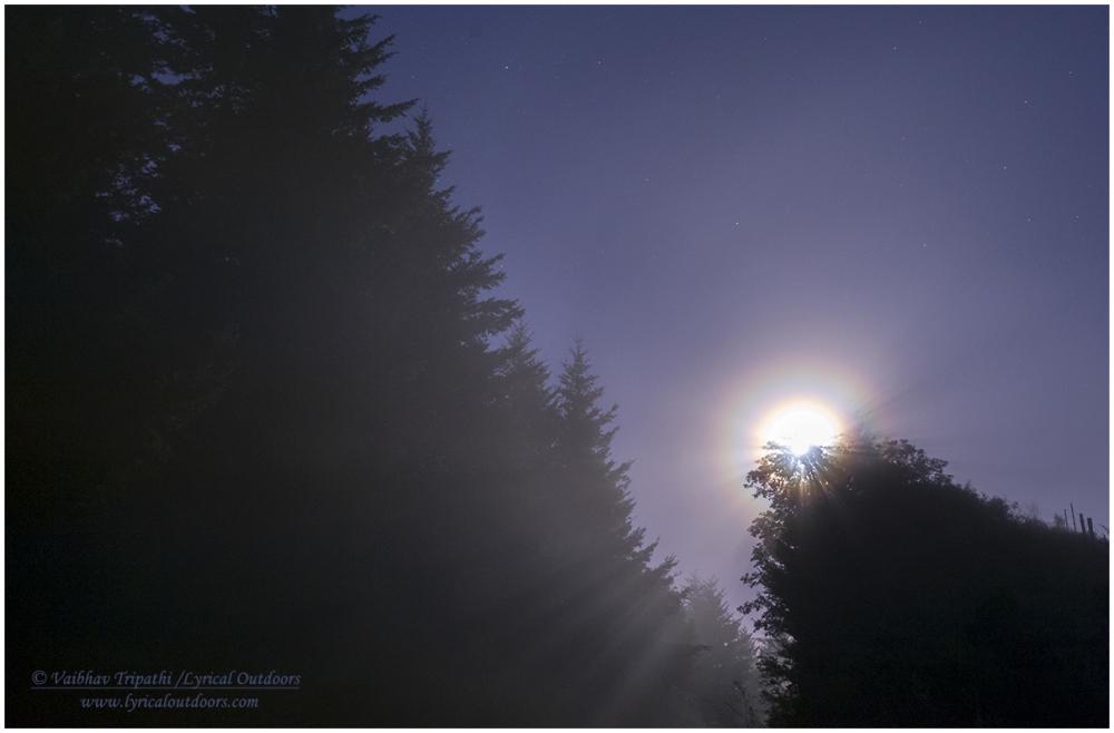 Lunar Corona in Fog, Santa Cruz Mountains, CA