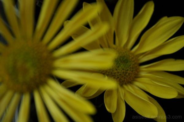 yellow flower Beautiful