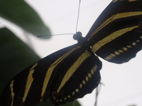 Under the Butterfly