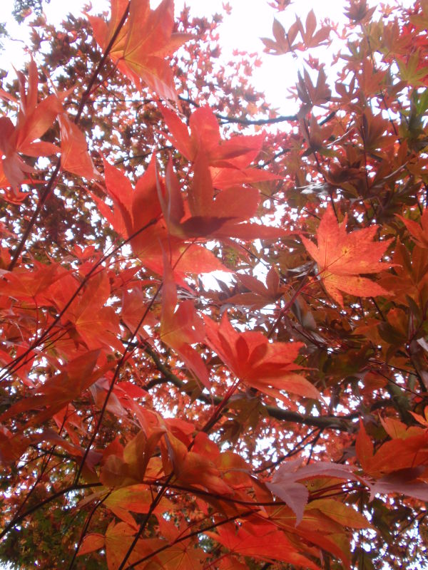 Red leaves in the autumn sun