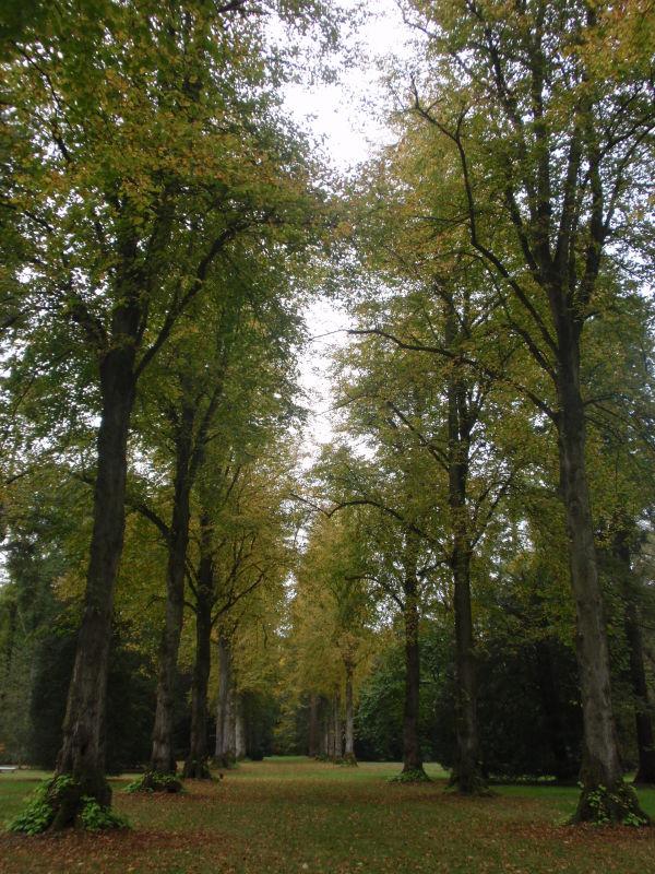 Lime Avenue, Old Arboretum