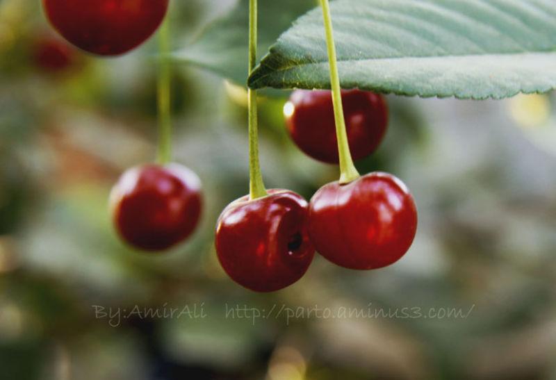 nature fruit