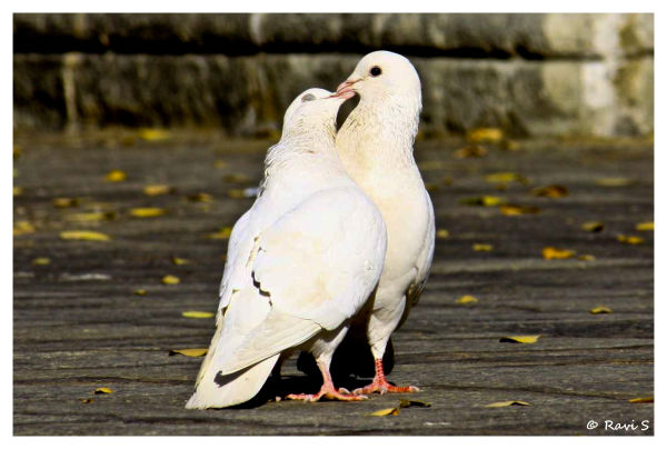Love # 2