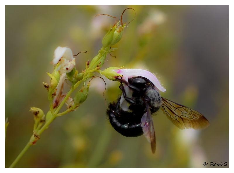 Bee-utiiful