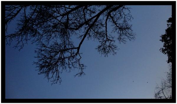 Un despertar bajo el árbol