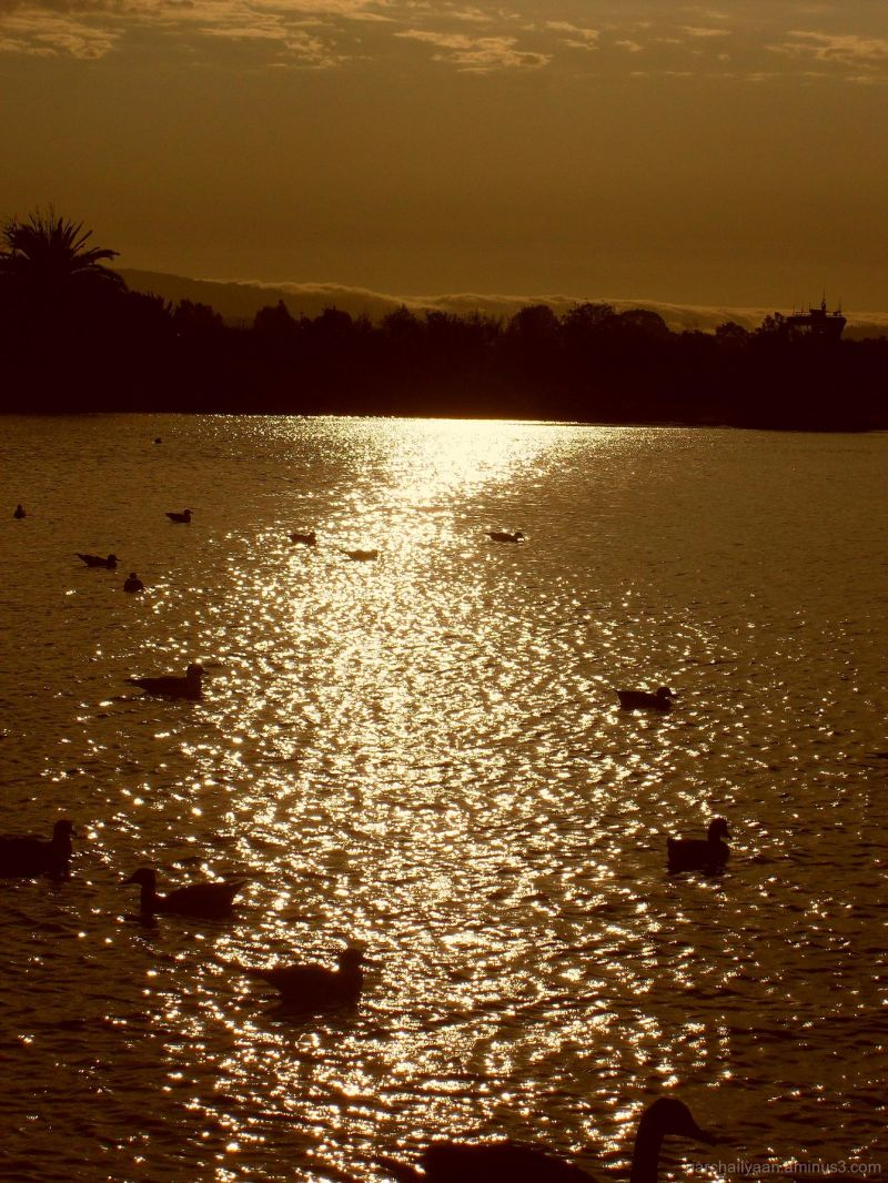 Dusk at the Duck Pond