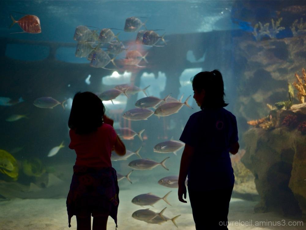 aquarium ,Cleveland