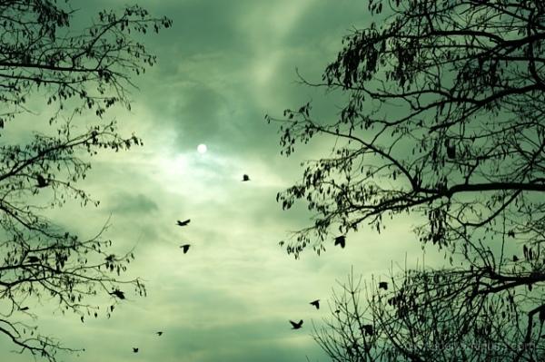 ciel soleil hiver oiseau acacia