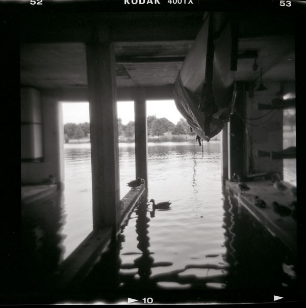 Ducks at white rock lake dallas