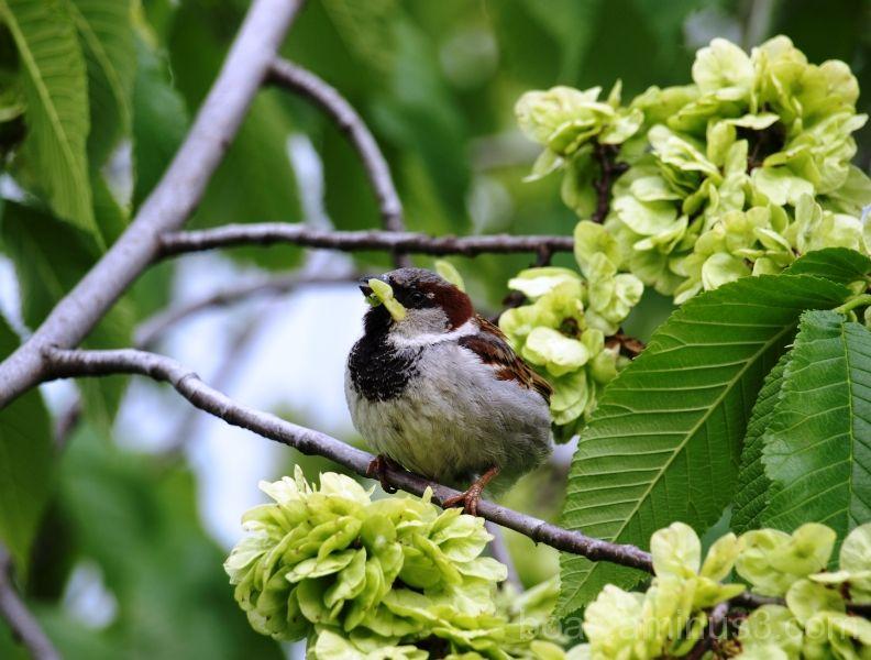 Bird in a treee