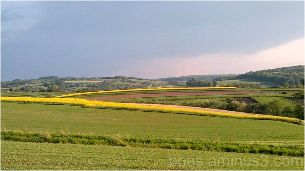 Fields in Poland