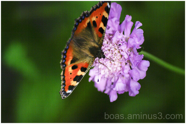 A butterfly in our garden