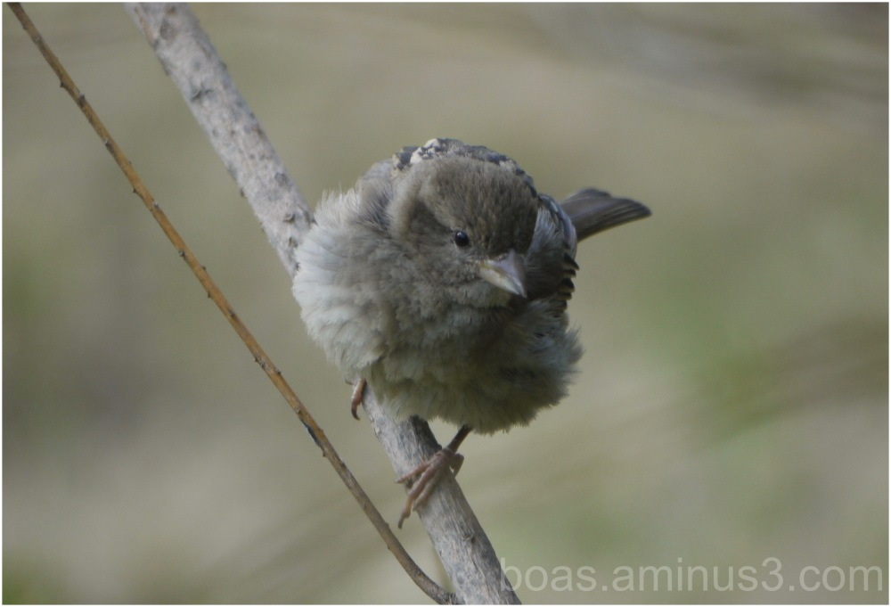 Morning bird