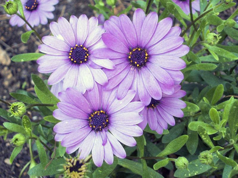 les flors i els seus colors