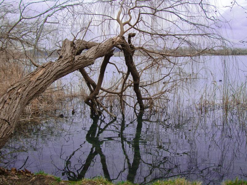 Desmaiat damunt l'aigua