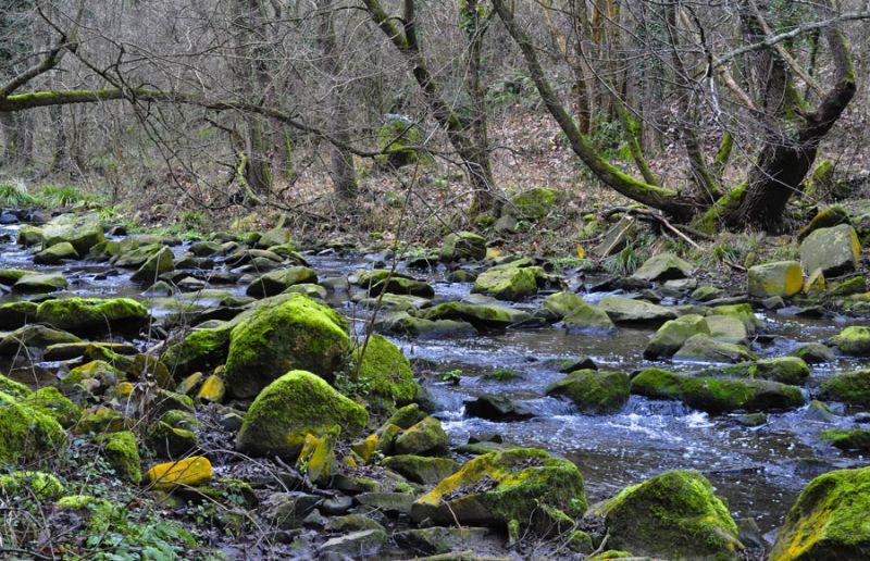 La remor del riu