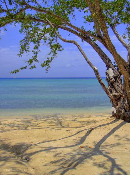 La d'imatges que haurà vist aquest arbre...