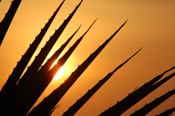 Spikes n Sunset
