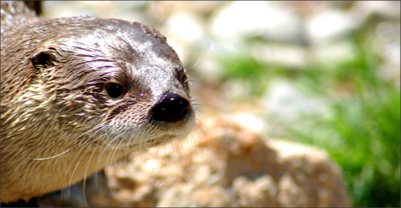 Oh Otter My Otter!
