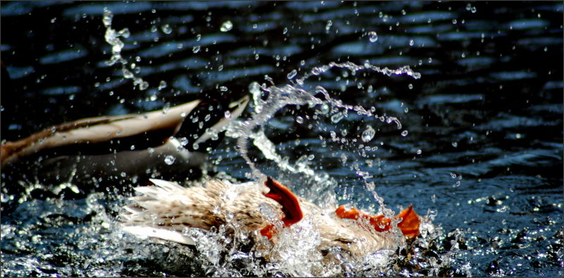 Sploosh Splash!