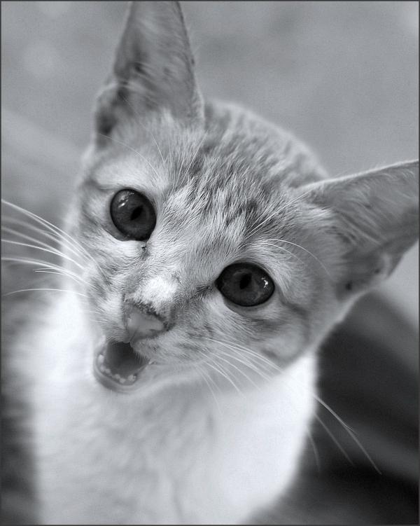 Meooow!