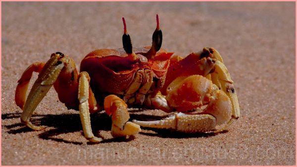 Crab - Beach encounter